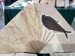 Окемелости на выставке минералов в Дэнвере. - 3.jpg