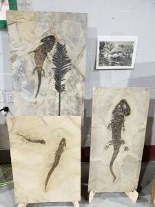 Окемелости на выставке минералов в Дэнвере. - 4.jpg