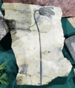 Окемелости на выставке минералов в Дэнвере. - 7.jpg