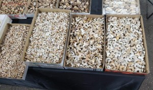 Окемелости на выставке минералов в Дэнвере. - 8.jpg