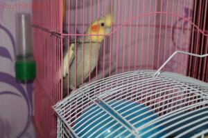 Фото наших домашних питомцев. и не только наших  - попугай.JPG