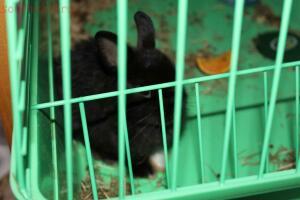 А этот появился у нас 8 апреля - кролик.JPG