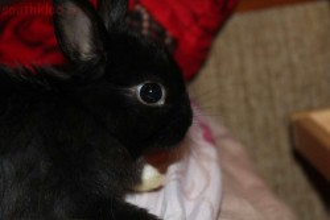 Весь чёрный, а одна лапка белая. - кролик..JPG