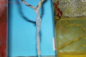 Выращиваем кристаллы - 5.JPG