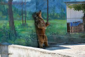 Ростовский зоопарк, одни из выходных - DSC_0197.JPG
