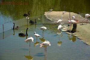 Ростовский зоопарк, одни из выходных - DSC_0315.JPG
