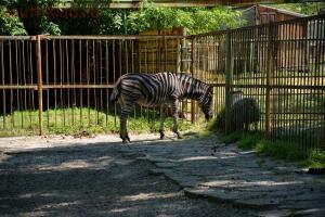 Ростовский зоопарк, одни из выходных - DSC_0352.JPG