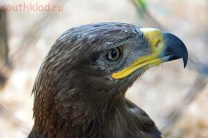 Ростовский зоопарк, одни из выходных - DSC_0427.JPG