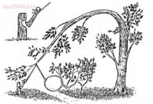 Охотничьи ловушки петли - 1-ie2_NoKf4c.jpg