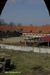 Тракенненский конный завод - 123.jpg