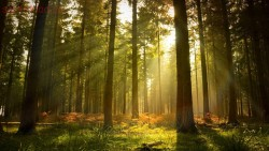 Поведение при потере ориентирования в лесу - VL5IfS062yI.jpg