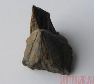 Фотогафии окаменелостей - 8_cr.jpg