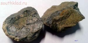 Мои окаменелости - окаменелость2.JPG
