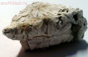 Мои окаменелости - окаменелость3.JPG