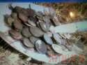 2009 год-187 монет империи . - album_thumbnail.php  КЛАД.jpg