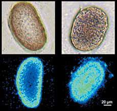 Загадки древней нанотехнологии - nanotech_future_2_229.jpg