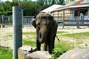 Ростовский зоопарк, одни из выходных - DSC_0144.JPG