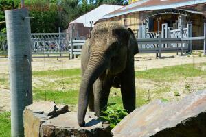 Ростовский зоопарк, одни из выходных - DSC_0145.JPG