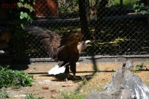 Ростовский зоопарк, одни из выходных - DSC_0391.JPG