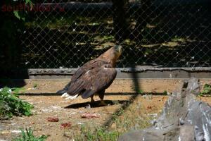 Ростовский зоопарк, одни из выходных - DSC_0401.JPG