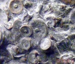 Окаменелости оказались металлическими зубчатыми цилиндрами. - post-3-13318243716808.jpg