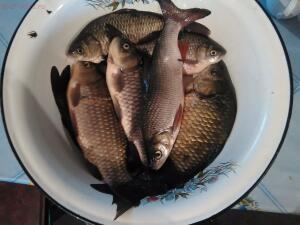 Рыболовный сезон 2016 - рыбалка.jpg