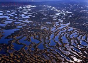 Васюганские болота - f7f4f2bdbd4b56c8ab521ffea5939e24.jpg