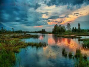 Васюганские болота - 8e4b65c20895db568e2107707ea7b3fa.jpg