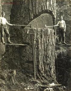 Редкие исторические фотографии - Лесорубы, Портленд, 1915 год.jpg