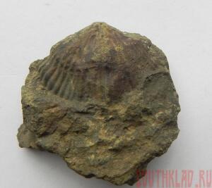 Фотогафии окаменелостей - 7_cr.jpg