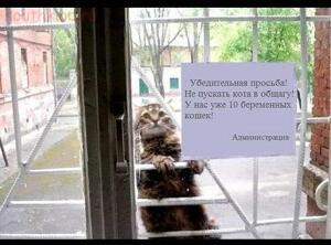 Фото наших домашних питомцев. и не только наших  - кот.jpg