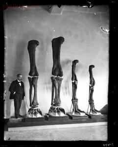 Мои найденные косточки - 9276865.jpg