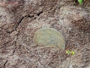 Как лучше хранить монеты сразу из земли. - 75692_1461154428.jpg