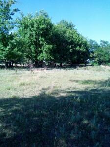 Ясна поляна - IMG_20170701_164650.jpg