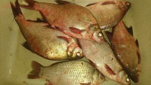 Рыболовный сезон 2017 - DSC_0296.JPG