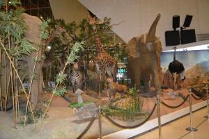 В одном из московских журналов говориться, что после профилактических работ по структуризации архива музея были найдены фотографии слона у которого поднят хобот и обнаружили особенность конструкции - он разбирается на 3 части - 2.jpg