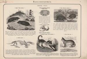 Наглядное знакомство с животными, водящимися в европейской России 1876 год - 0_1e856d_7c6e278_orig.jpg