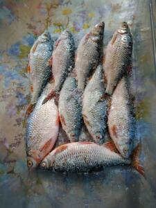 Рыболовный сезон 2018 - 6.jpg