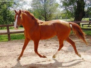 Донская порода лошадей уничтожина. - 1330004335_c22b70eeec69.jpg