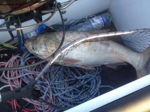Рыболовный сезон 2018 - BtSPMLSL92M.jpg