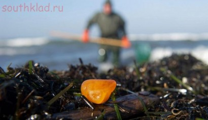 В Калининградской области пляж засыпало янтарем - 3764009.jpg