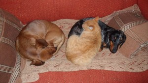 Фото наших домашних питомцев. и не только наших  - SAM_0763.JPG