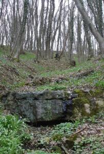 Прогулка и старый хутор - DSC00532.JPG