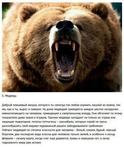 10 животных, которые могут тебя съесть - 40G28kOrp7M.jpg