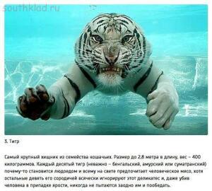 10 животных, которые могут тебя съесть - imcNvbJ97-M.jpg