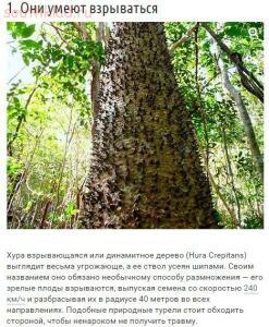 10 странных вещей, которые умеют делать деревья - OyQ4IYoQsbY.jpg
