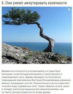 10 странных вещей, которые умеют делать деревья - RW05iB-qcHQ.jpg