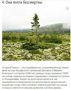 10 странных вещей, которые умеют делать деревья - YFQKmL6qK6E.jpg