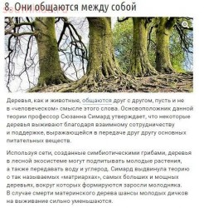 10 странных вещей, которые умеют делать деревья - zH0Ad3VRj8g.jpg