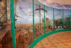 Диорама Звери и птицы у себя дома  - музей диорама.JPG